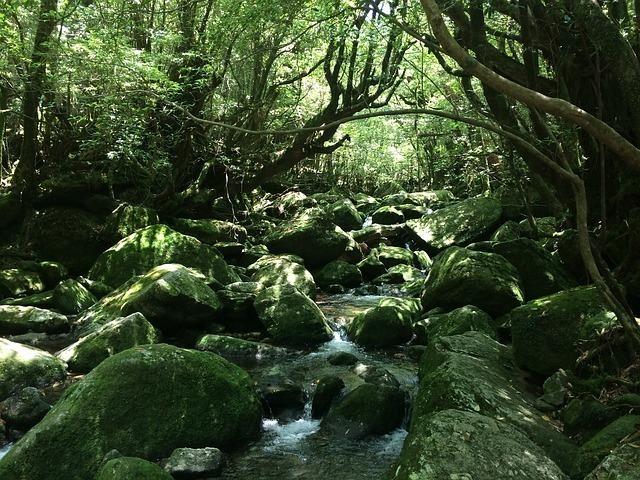 yakushima-island-463227_640.jpg